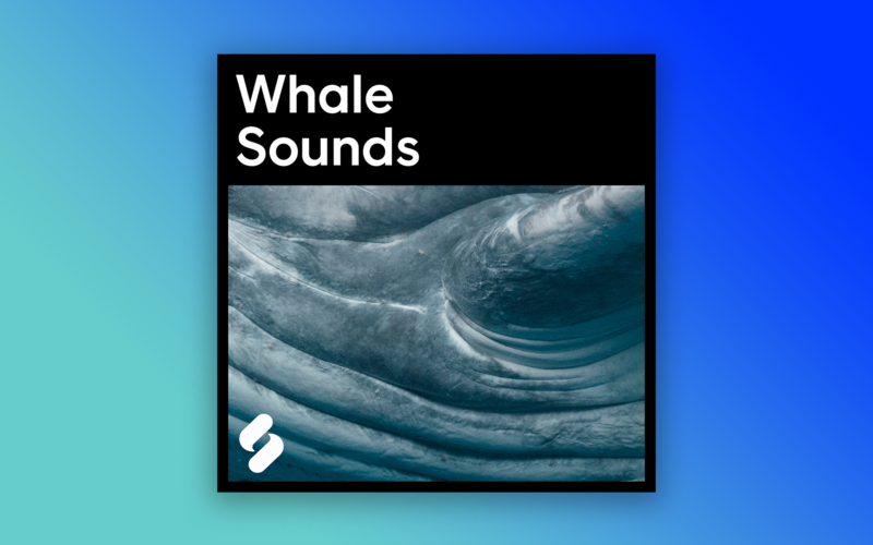 whale-sounds-featured-image